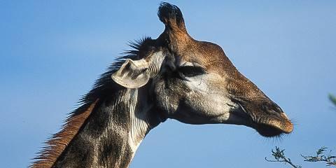 7-Day Masai Mara, Lake Nakuru, Samburu & Aberdare