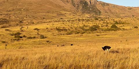 8-Day Splendors of Kenya