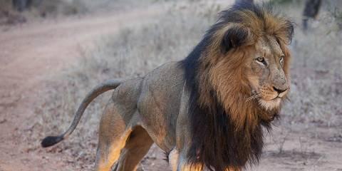 2-Day Entabeni Game Reserve - Wildside Tented Camp