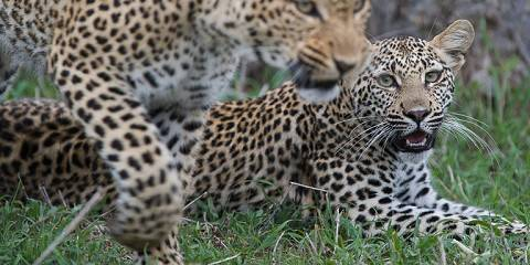 5-Day Big 5 Safari--Two Reserves--Sabi Sands & Manyaleti