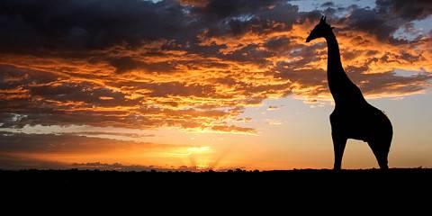 8-Day Best Value Botswana (mid-Range)