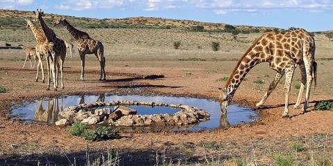 6-Day Conservation Safari in South Africa
