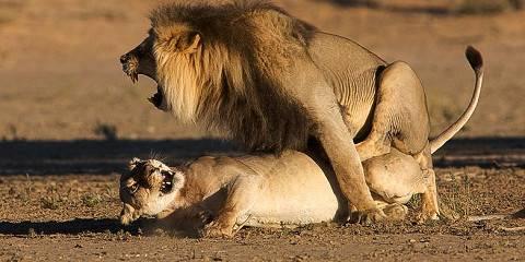 4-Day Sabi Sands Big Cat Safari