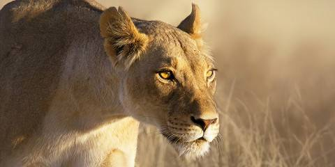 3-Day Budget Greater Kruger National Park Safari