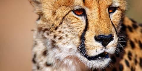 4-Day Kruger Wildlife Safari - Lodge