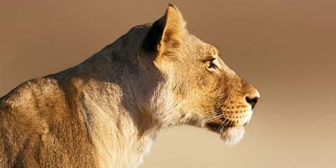 8-Day Big 5 Traditional Safari--Manyaleti/Greater Kruger