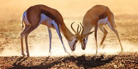 12-Day Birding Safari