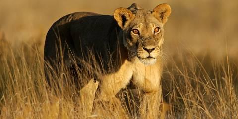 7-Day Botswana Mobile Safari