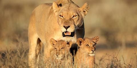 4-Day Central Kalahari Game Reserve and Nxai Pan