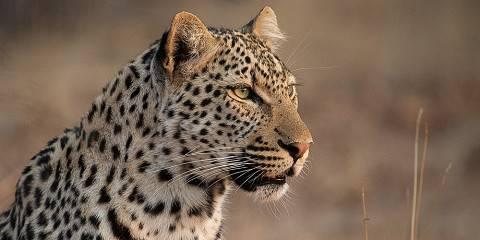 10-Day South Africa Safari