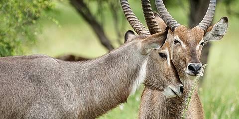 4-Day Join Group Lake Manyara, Serengeti, and Ngorongoro