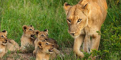 3-Day Madikwe Safari Package