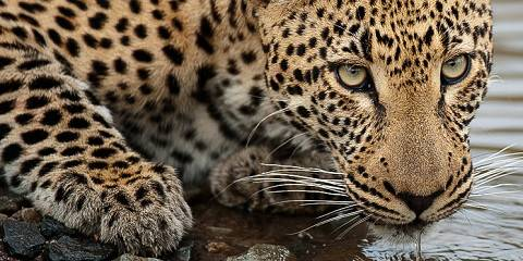 4-Day Exclusive Fly-in Sabi Sabi Safari from Cape Town