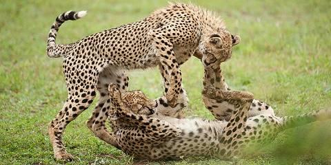 7-Day Best of Kenya Wildlife Budget Safari Tour 2021
