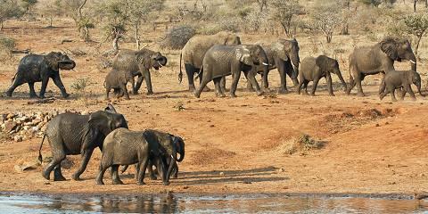 5-Day Kruger and Sabi Sand Rustic Tented Camp Safari