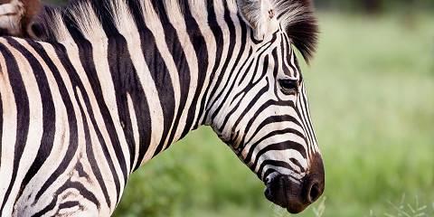 4-Day Sleep out Walking Safari