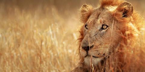 Kruger Wildlife Safari, Incl Kruger NP