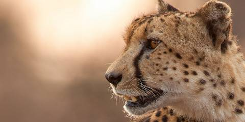 1-Day Cape Wine Lands & Cheetah Outreach - Private Tour
