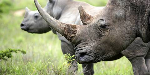 4-Day Kruger National Park Safari