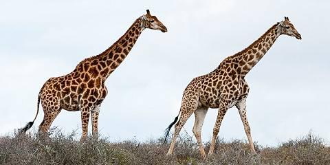 6-Day Bush & Beach Safari in South Africa