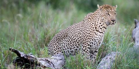 5-Day Kruger Park Bungalow and Sabi Sand Lodge Safari