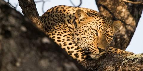 6-Day Affordable Ngorongoro and Serengeti Safari