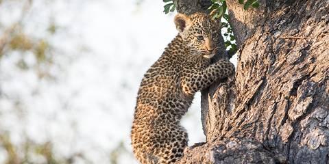 6-Day Tanzania Lodging Safari Highlights