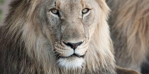5-Day Big 5 Sabi Sands Luxury Safari (Focus on Leopards)