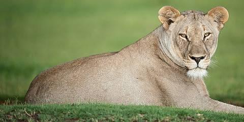 5-Day Ultimate African Big Five Safari