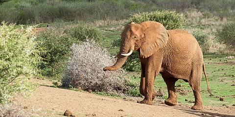 2-Day Savanna Private Game Reserve