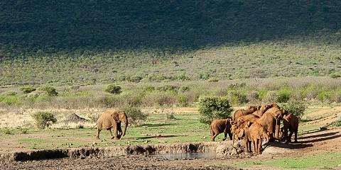 Affordable Kenyan Breakaway Safari
