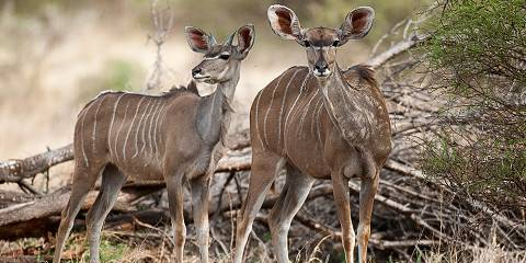4-Day Kruger Park Lodge and Panorama Tour