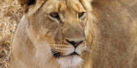 5-Day Kruger Safari, Panoramic Tour & Adventure Combo