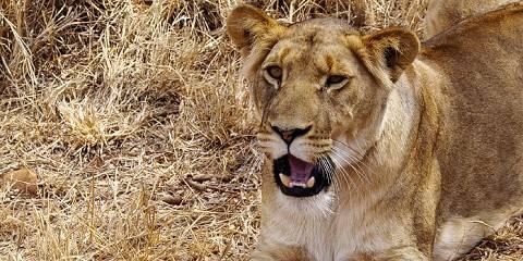 3-Day Maasai Mara Classic Safari - Joining Group