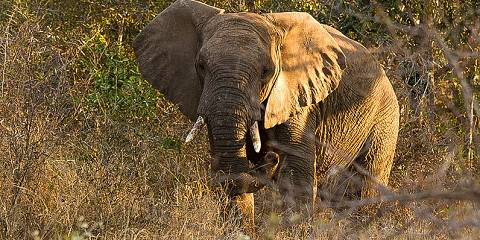 2-Day 5 Star Luxury Safari in the Pilanesberg Reseve
