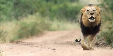 4-Day Affordable Kruger Wildlife Safari