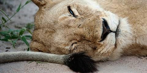 5-Day Sabi Sands and Kruger Park Safari