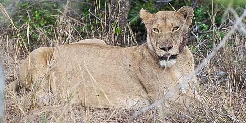 3-Day Etosha Camping Safari