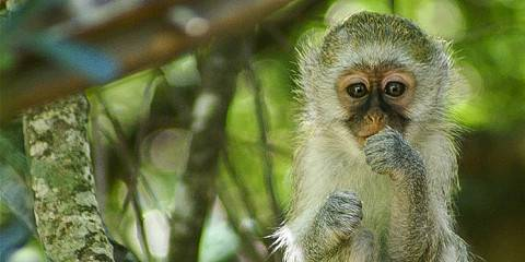12-Day Madagascar – a Land of Contrast