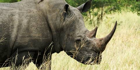 4-Day Malaria Free Big 5 Safari in Madikwe
