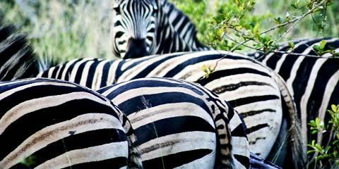 7-Day Klaserie & Hluhluwe Safari