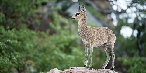 12-Day Best of Kenya Wildlife Adventure Safari