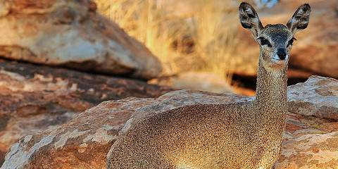 3-Day / 2Nights Mkomazi Safari
