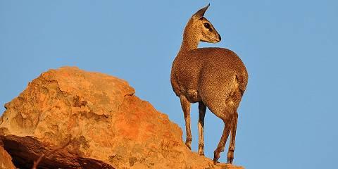 2-Day Amboseli Budget Private Safari from Nairobi