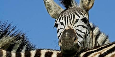 5-Day Kruger Safari - Cultural Tour - Panorama Route