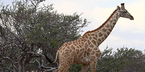 8-Day The Standard Tanzania Safari and Zanzibar Island