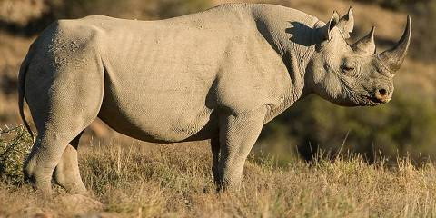 Kruger Park Treehouse Safari