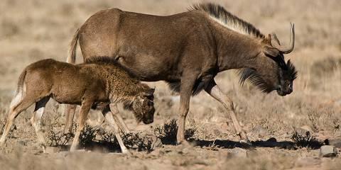 5-Day Kruger Mountain Tented Camp Safari