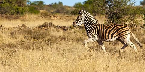 15-Day Classic Namibia Safari