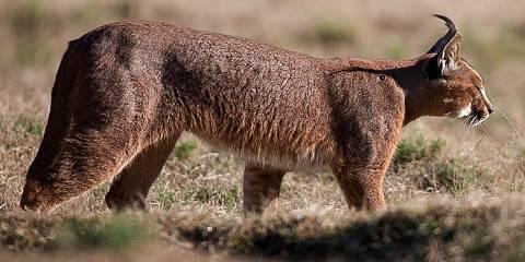 7-Day Samburu/Olpejeta/Naivasha/Maasai Mara